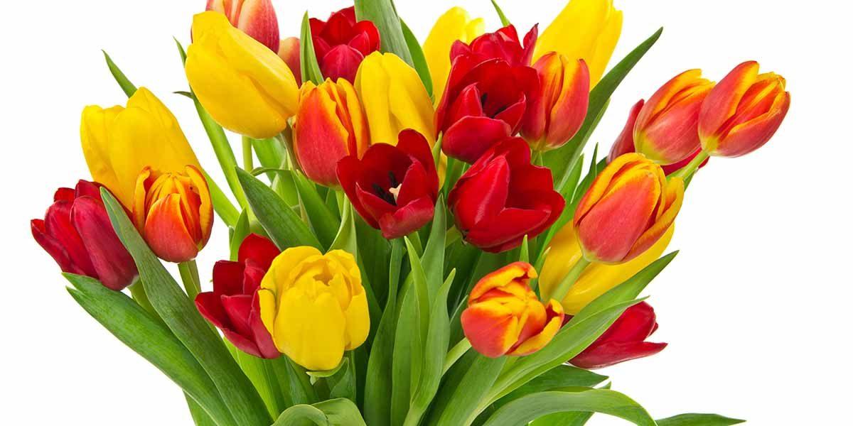 gele_en_rode tulpen_Keukenprint_volledig