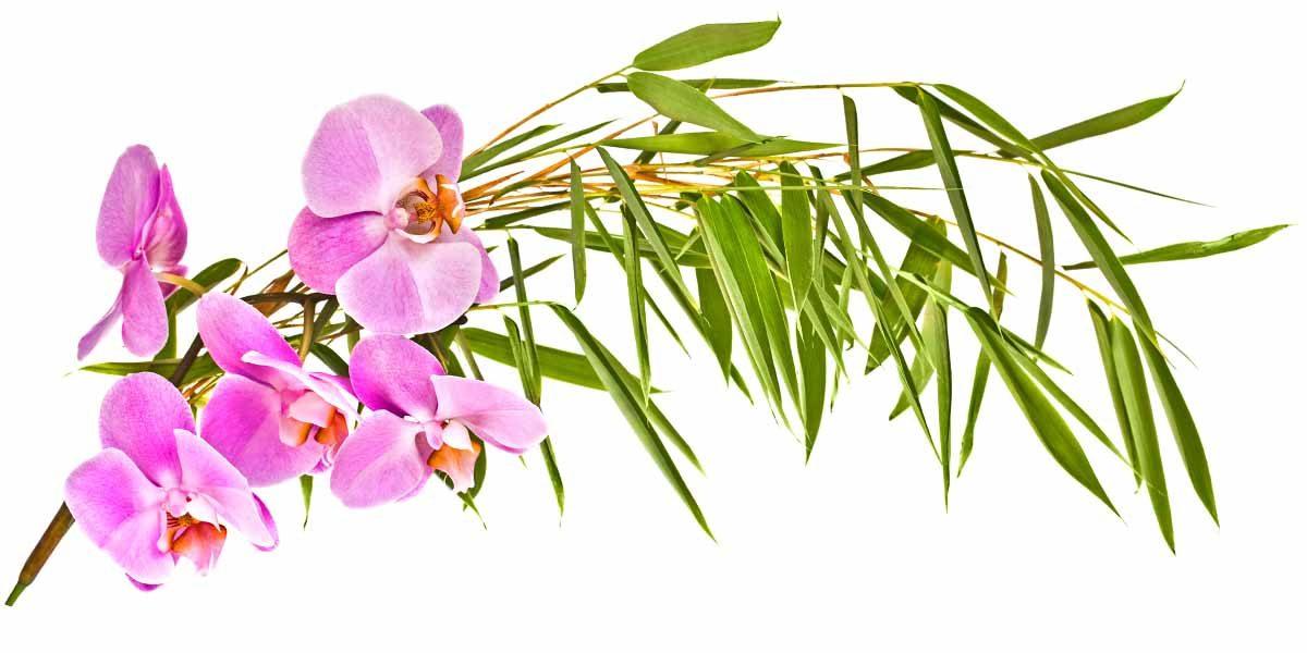 orchidee_1_Keukenprint_volledig
